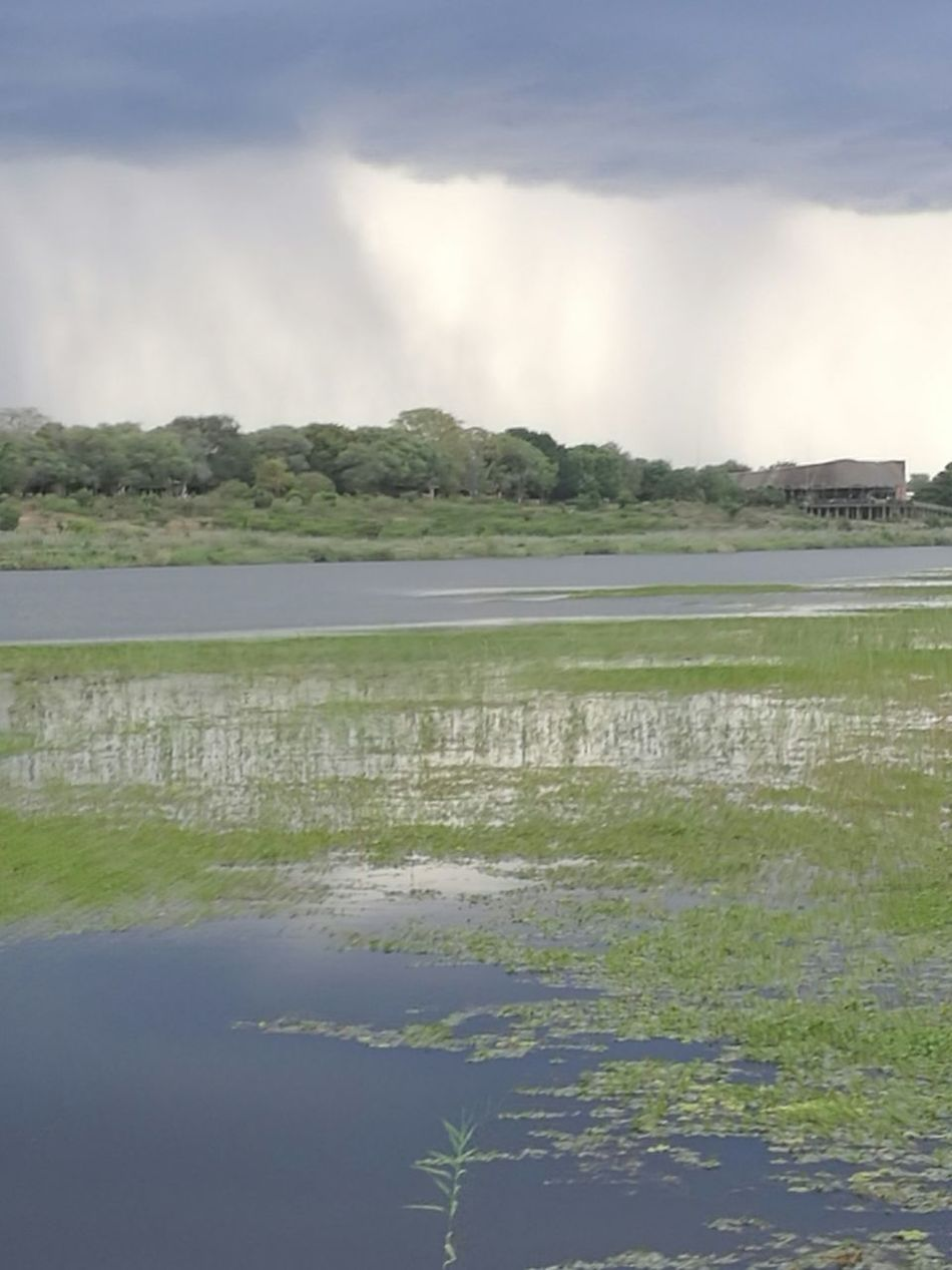 Beautiful scenery in Kruger national park Nature Tree Water Outdoors Cloud - Sky Beauty In Nature Scenics Freshness Nature Reserve South Africa 🇿🇦 Skukuza