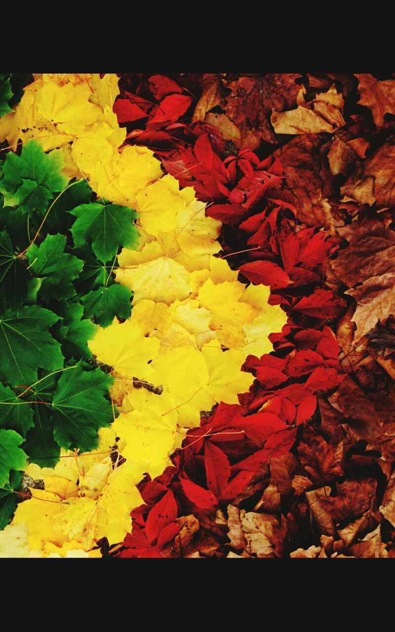 leaf, yellow, flower, fragility, no people, nature, change, petal, close-up, beauty in nature, outdoors, day, flower head, freshness