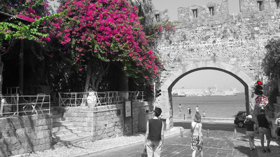 See the beauty in your life! Beauty In Nature Blackandwhite Blütenschönheit Castel Color Flower Griechenland Red Light Rhodos Standing Stop Street Streetphotography Taking Photos Traffic Lights Travel Photography Traveling Tree EyeEm Taking Pictures Tourism EyeEm Nature Lover EyeEm Best Shots
