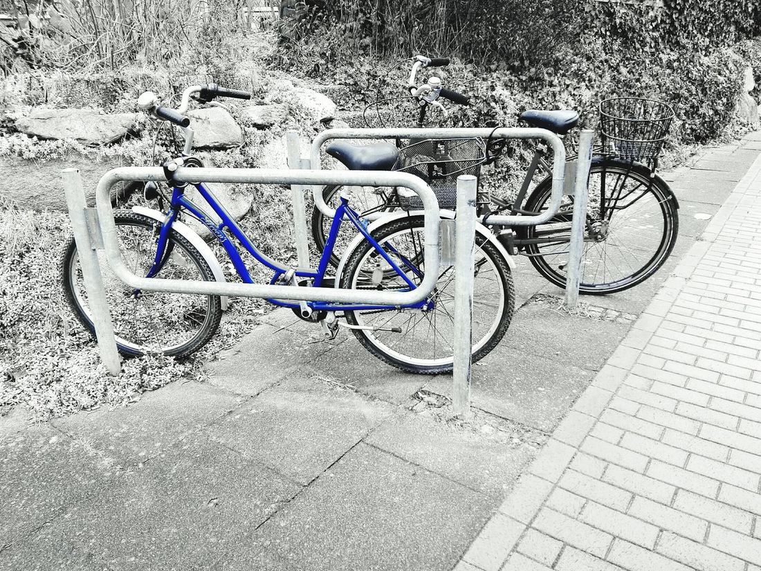 Check This Out two Bycicles in Black And White With A Splash Of Colour Blue Bycicle Parking Bycicle Art Bycicle Lovers Bycicle Unites Bycicle Photography Eye4photography  Outdoors No People Bicycle Rack Transportation Bicycle Day Fresh On Eyeem
