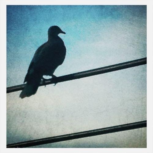 Birdwatching Birds Eye4photography