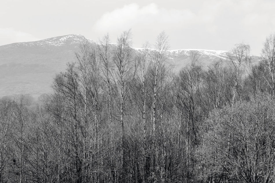 Beauty In Nature Coniston Coniston Water Lake District Mountain Mountain Range Nature Snow On The Mountain Lake District Series The Lake District  Coniston Waters Countryside Rural Landscape Rural Scenes EyeEm Best Shots - Black + White EyeEm Best Shots - Landscape EyeEm Best Shots EyeEmBestPics EyeEm Gallery Snowcapped Mountain Snow Covered Tree_collection  Trees And Nature EyeEm Trees And Sky
