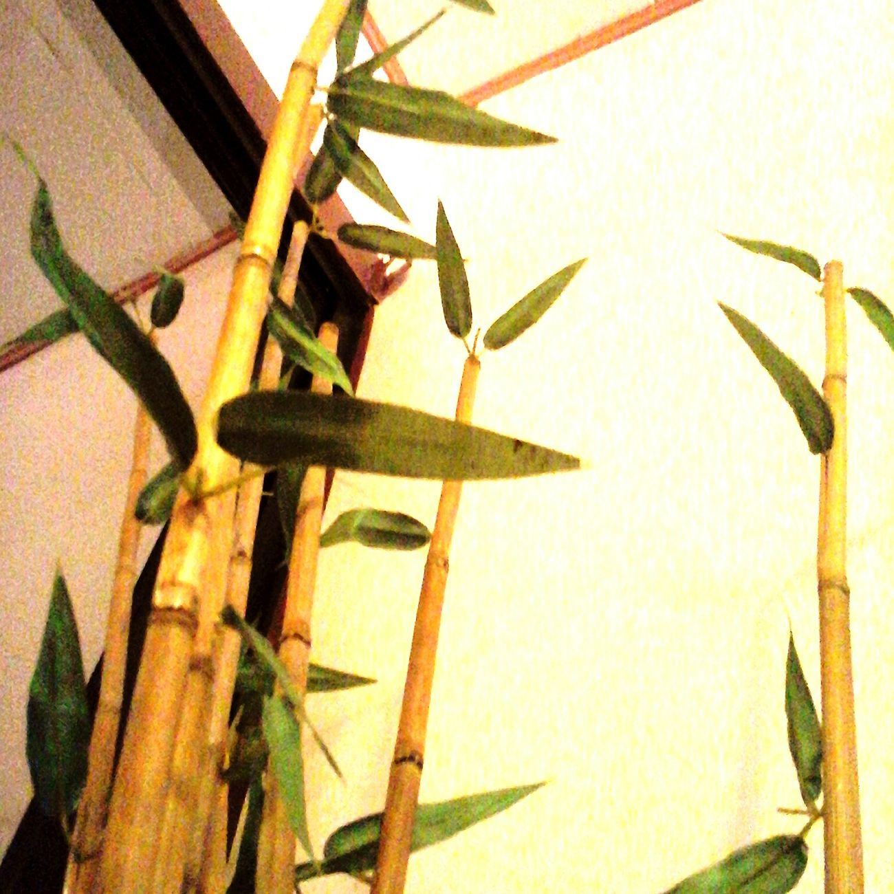 Bamboo Bamboo Tree... Bamboo Art Bamboo Leaf Bamboodesign
