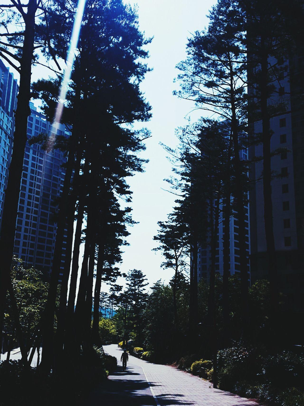 2016.5.20.0130Zulu Free Friday Morning Korea Wicity Sunshine 울창 first eyeem photo