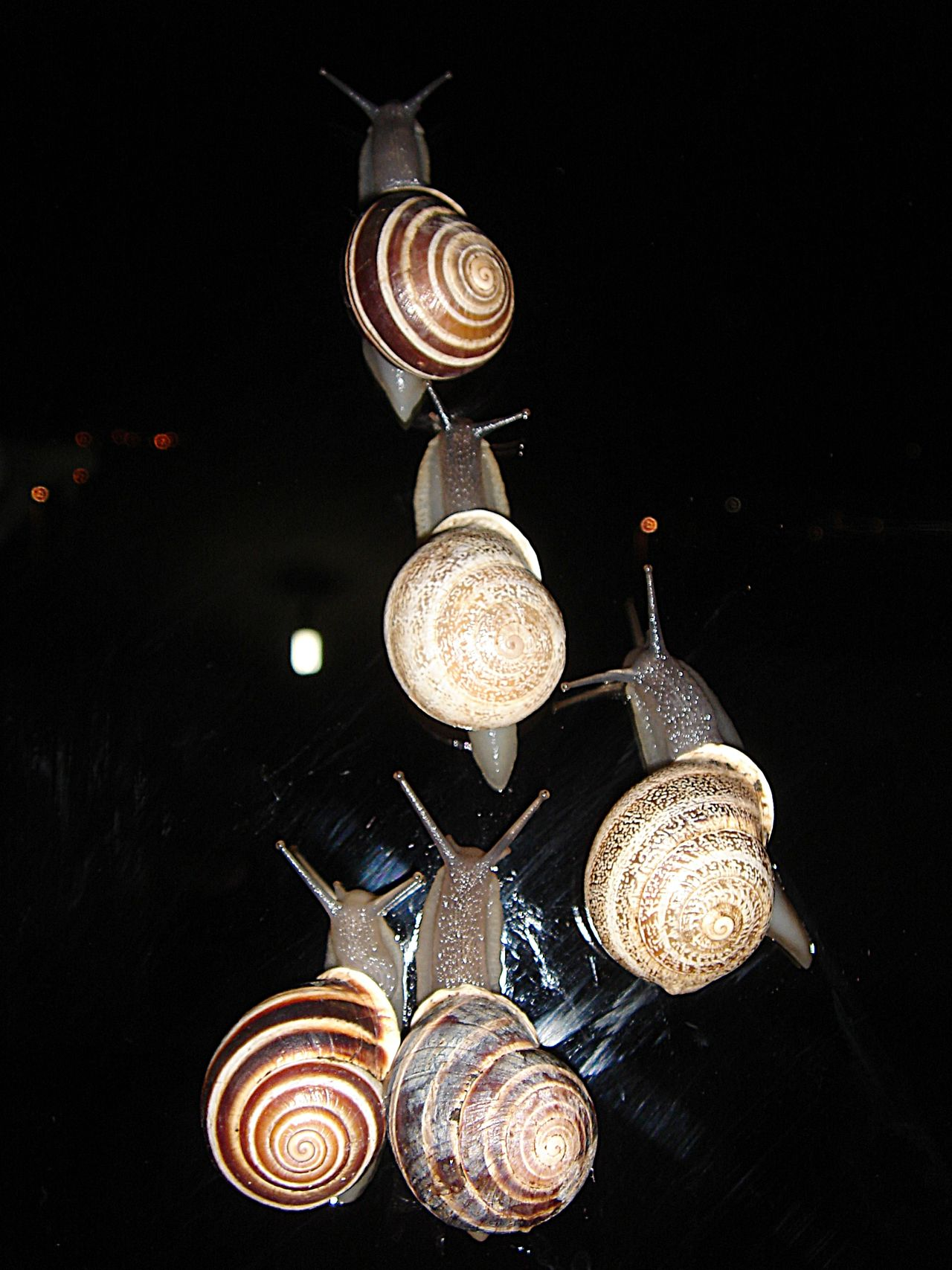 Art Art Numerique Close-up Electricity  Escargot Filament Fond Noir Hanging Illuminated Indoors  Light Bulb Lighting Equipment Low Angle View Luxury No People Old-fashioned Photo Flach