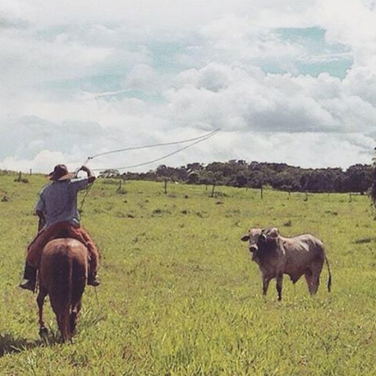Sabaneando ando💪🐂 Llano Finca Lunes