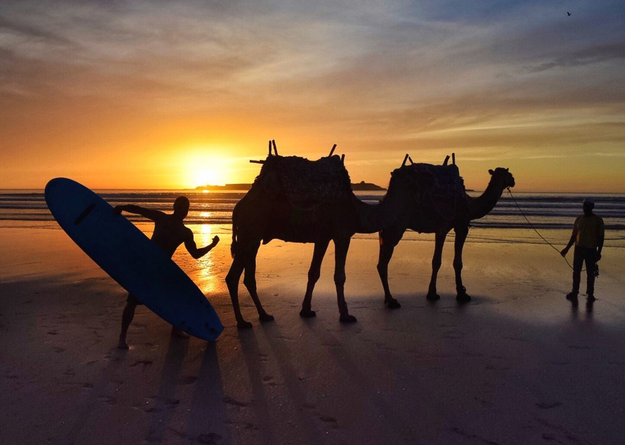 Sunset Working Animal Domestic Animals Horse Mammal Sky Nature Transportation Silhouette Sea Beauty In Nature Beach Sand Horizon Over Water Horse Cart Outdoors Men Scenics People Travel Destinations Travel Photography Holidays Holiday Trip Wanderlust Adventure
