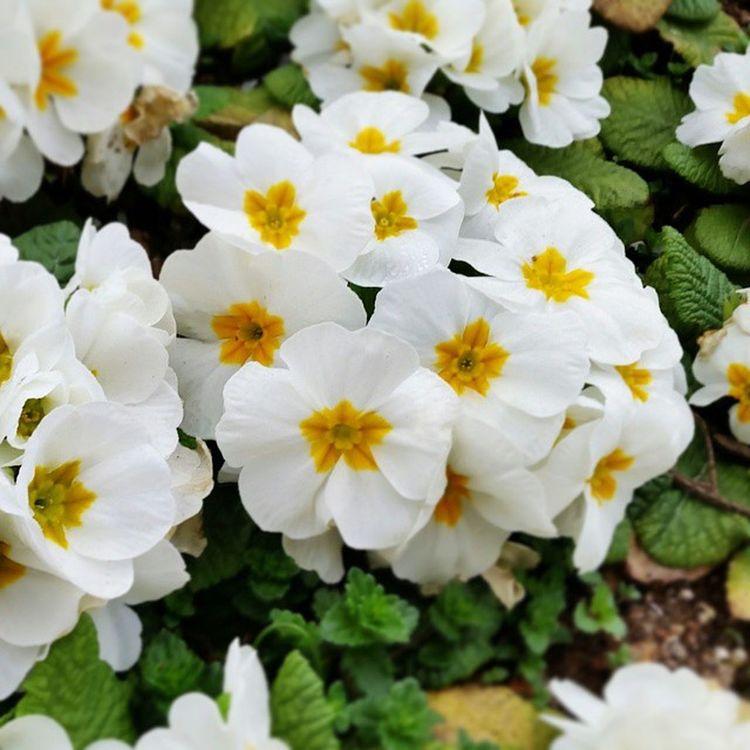 Flower çiçek Bahar Spring