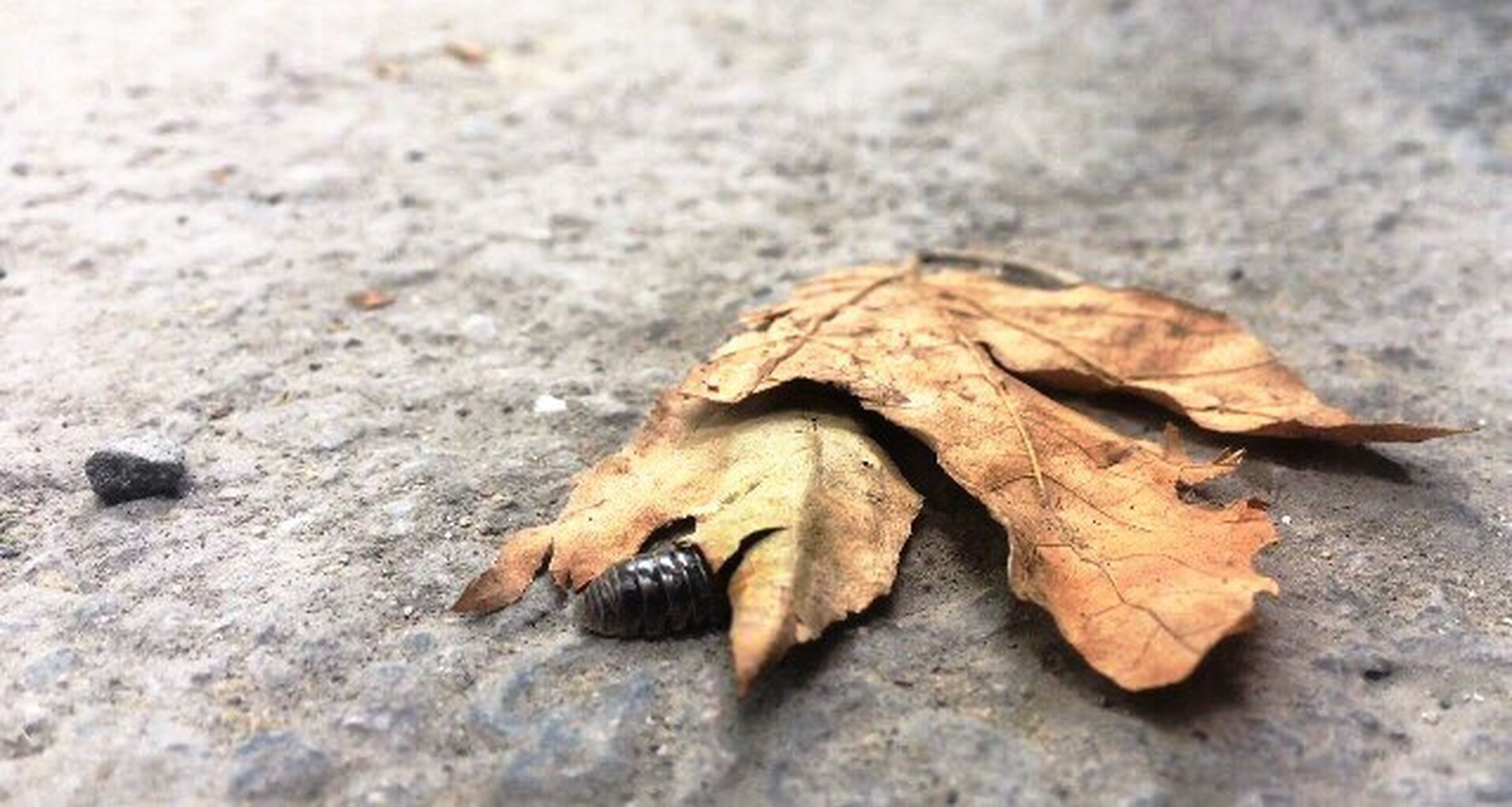 leaf, autumn, dry, change, outdoors, nature, day, one animal, no people, selective focus, animal themes, close-up, beauty in nature, maple