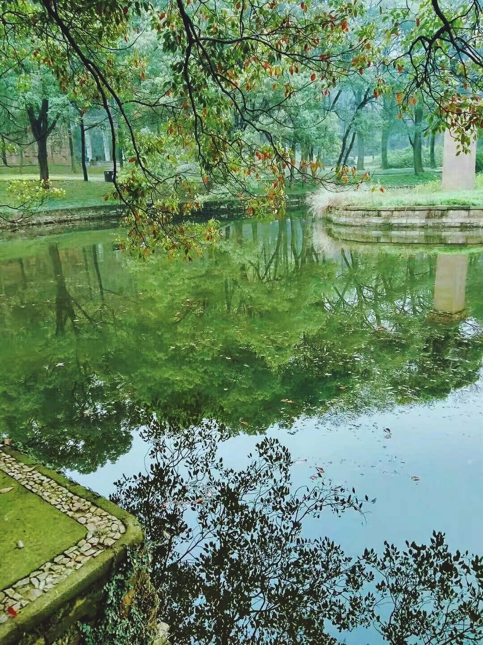 reflection, water, tree, lake, nature, beauty in nature, standing water, day, tranquility, outdoors, growth, no people, tranquil scene, branch, waterfront, scenics, green color, flower, puddle, grass