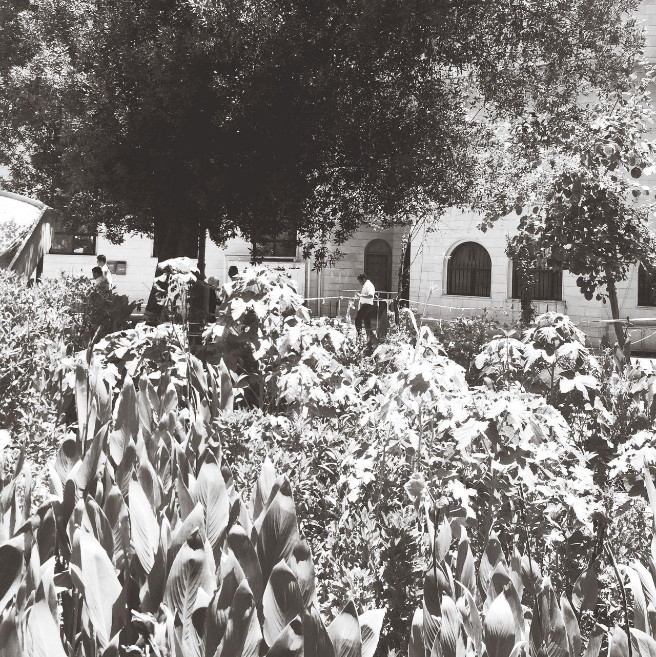 4_k @4pics_88 #follow #like #صورة #صور #تصوير #تصميمي #تصميم #عدستي #كانون #فولو #فولو_مي #فولومي #فن #طبيعه #ورد #اطفال#موضه #السعوديه #الكويت #اليمن #قطر #عمان #البحرين #الامارات#مصر #لبنان #سوريا #اربعه_صور #اربع_صور   My Photography سوق القديم Kuwait
