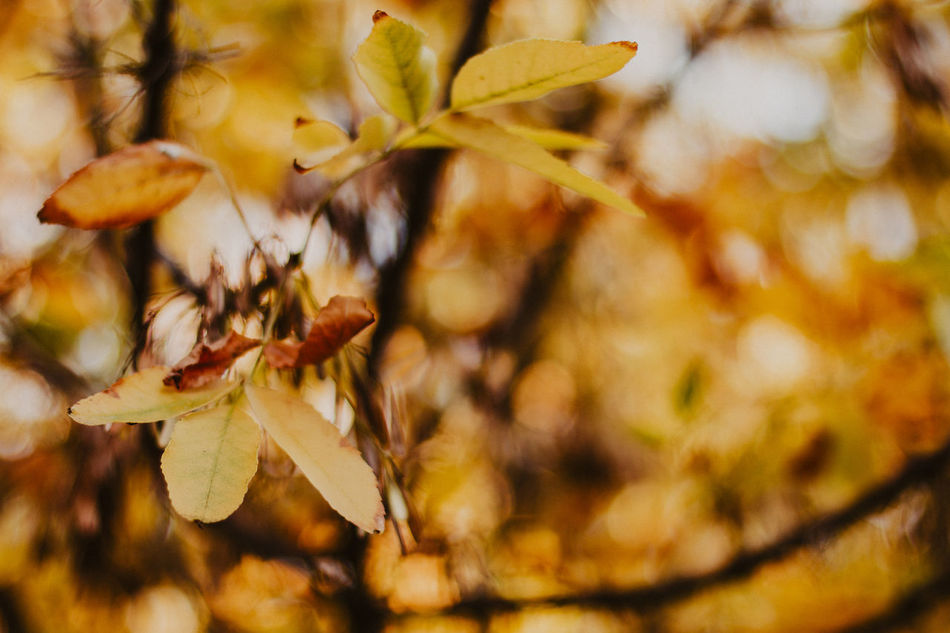 Autumn Animal Themes Autumn Beauty In Nature Branch Change Close-up Day Flower Fragility Freshness Growth Insect Leaf Nature No People Outdoors Tree