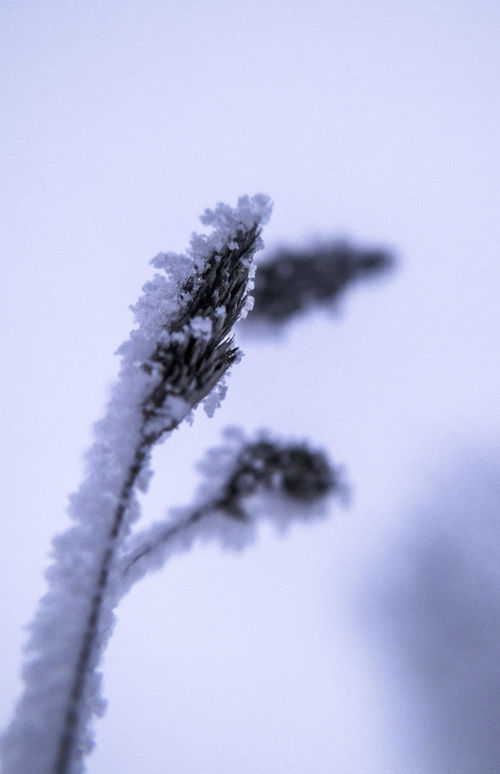 Beauty In Nature Close-up Coastline Cold Cold Temperature Depth Of Field Frost Grass Ice Nature Outdoors Selective Focus Snow White Winter