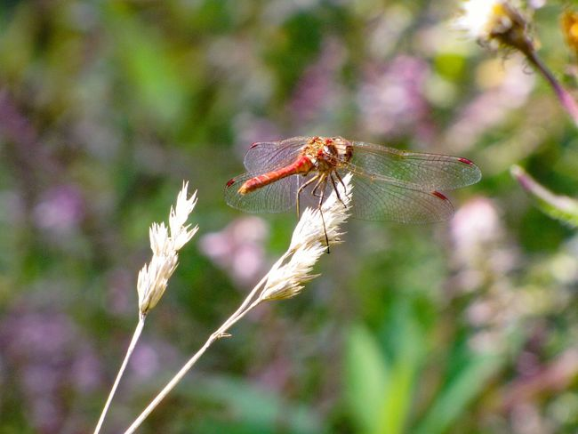 Dragonfly Focus On Foreground Animal Themes Animals In The Wild Close-up Nature Insect Day Macro Macro_collection Macro Photography Eyeem Insects EyeEm Macro Bokeh Bokeh Photography