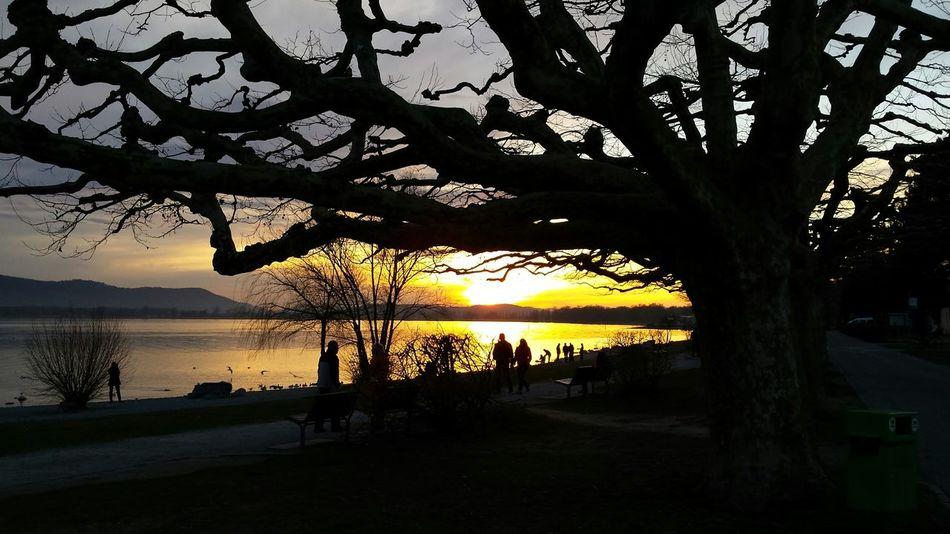 Natural Beautiful Surroundings Konstanz Germany EyeEm Nature Lover Eyeem Made In Gernany 🇩🇪Photos Club📷 Nofilter#noedit Lake Beautiful Day Radolfzell