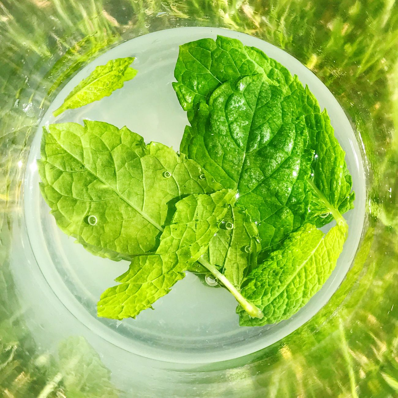 Mint and water in a glass Green Color Food And Drink Leaf Freshness High Angle View Directly Above Food Healthy Eating Vegetable No People Mint Leaf - Culinary Close-up Outdoors No People Close Up Day Ready-to-eat Mint Mint Leaves Water Refreshment Refresh