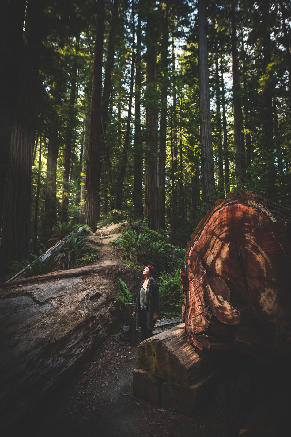 Lost & Found One Person Real People Forest Lifestyles Tree People Nature Outdoors Young Adult Day California Pacific Northwest  Nature Travel Photography Full Frame Travel Green Color Showcase: April Redwoods Environment Idyllic Dreamy The Secret Spaces