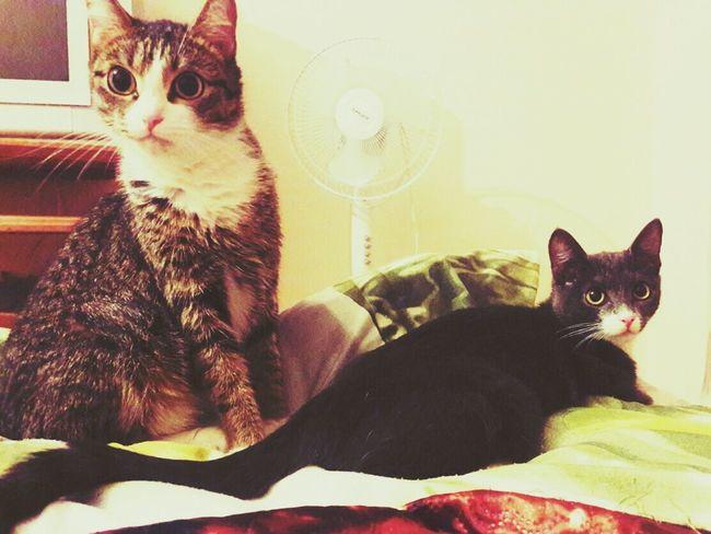 My Cats Animals🐾