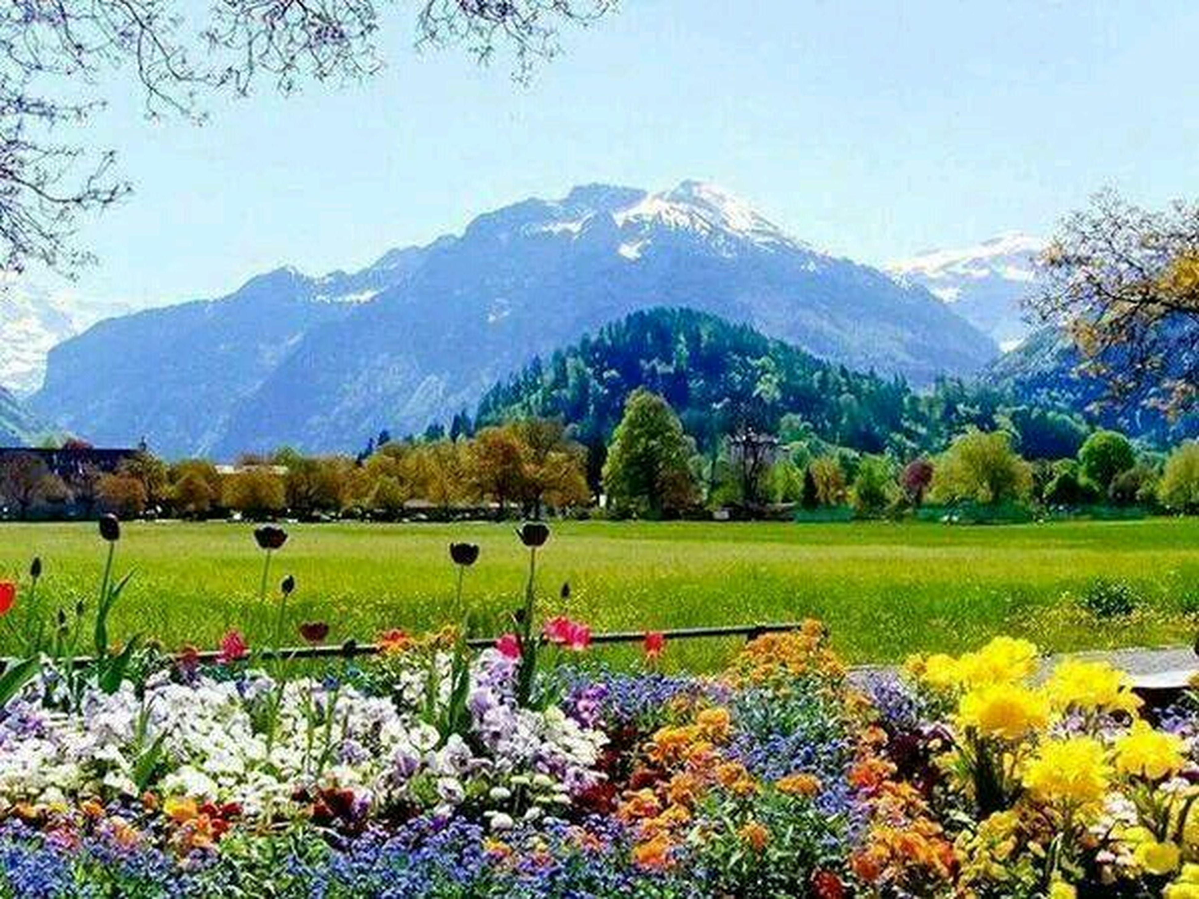 mountain, beauty in nature, landscape, tranquil scene, mountain range, flower, tranquility, scenics, field, nature, tree, growth, clear sky, grass, sky, season, rural scene, non-urban scene, plant, idyllic