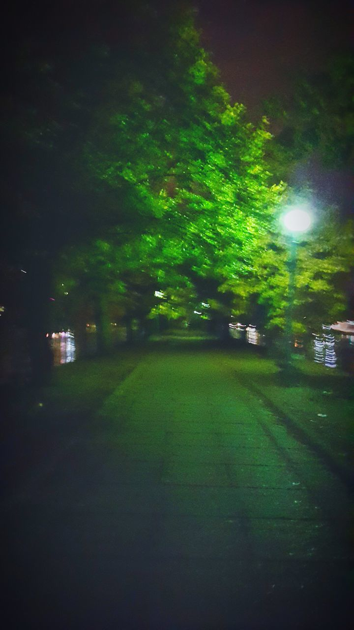 illuminated, green color, night, no people, outdoors, tree, the way forward, nature, road, grass, defocused, sky