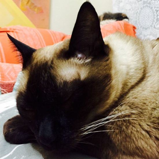 Brasil ♥ Hello World Cat♡ Cat Cats Lovecats❤️ I Love My Cat I Love My Cats  Hi! That's Me