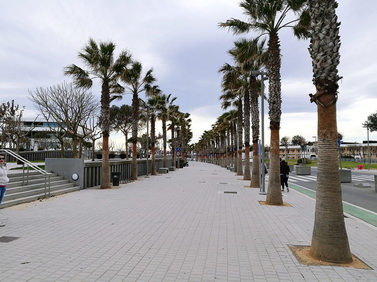 tree, the way forward, outdoors, palm tree, day, sky, walkway, built structure, water, no people, architecture, nature