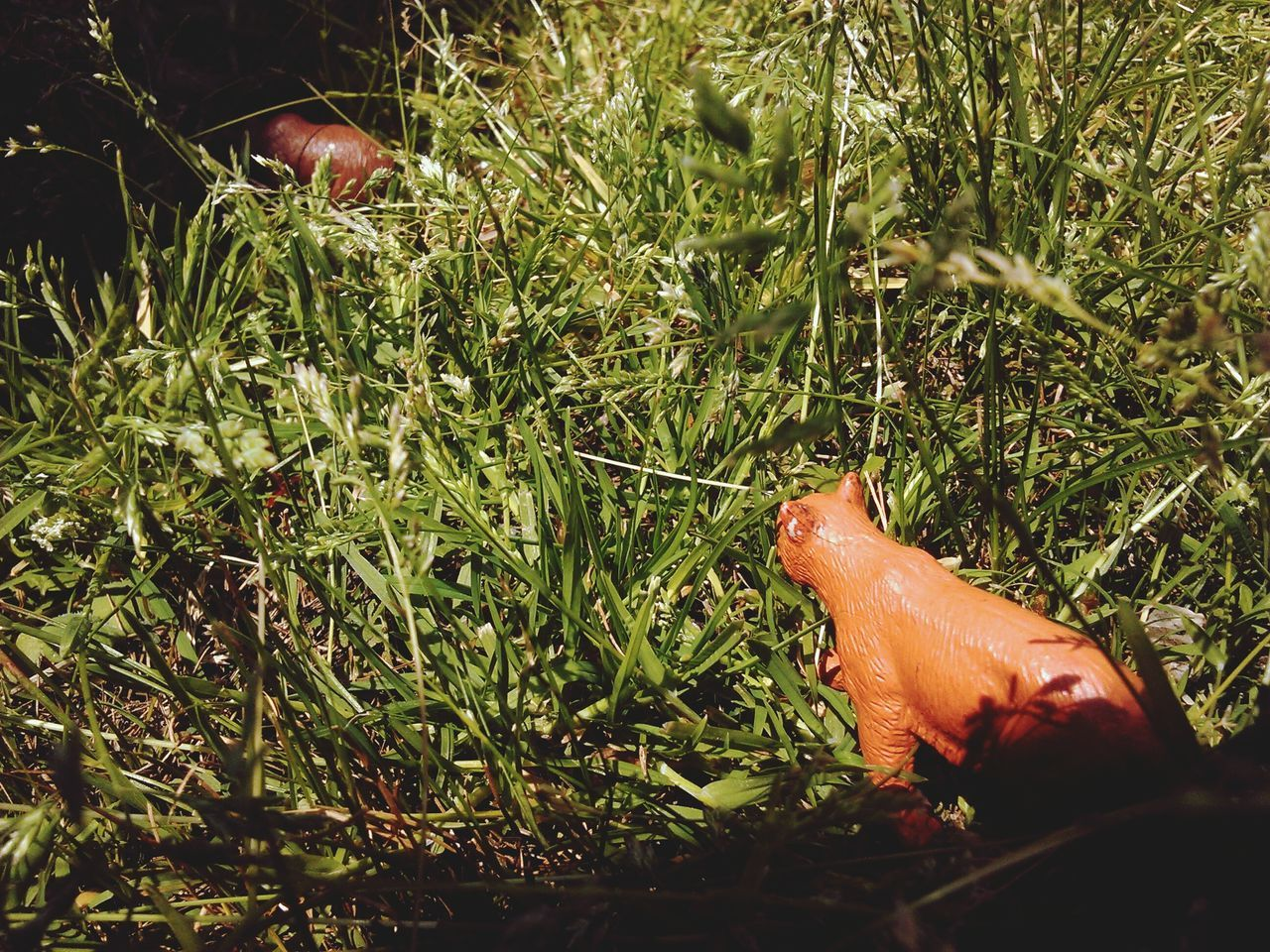 Toys On Grassy Field