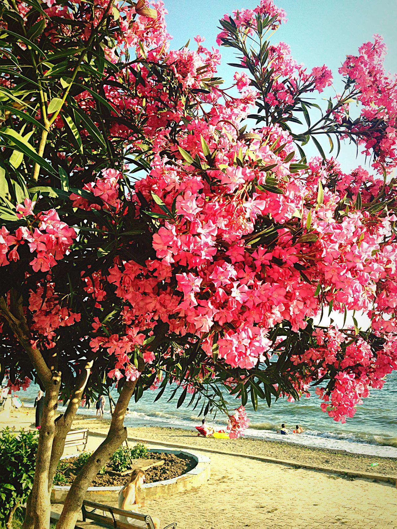 Enjoying The Sun Flowers Sea Relaxing Beautiful Day Enjoying Life Hello World