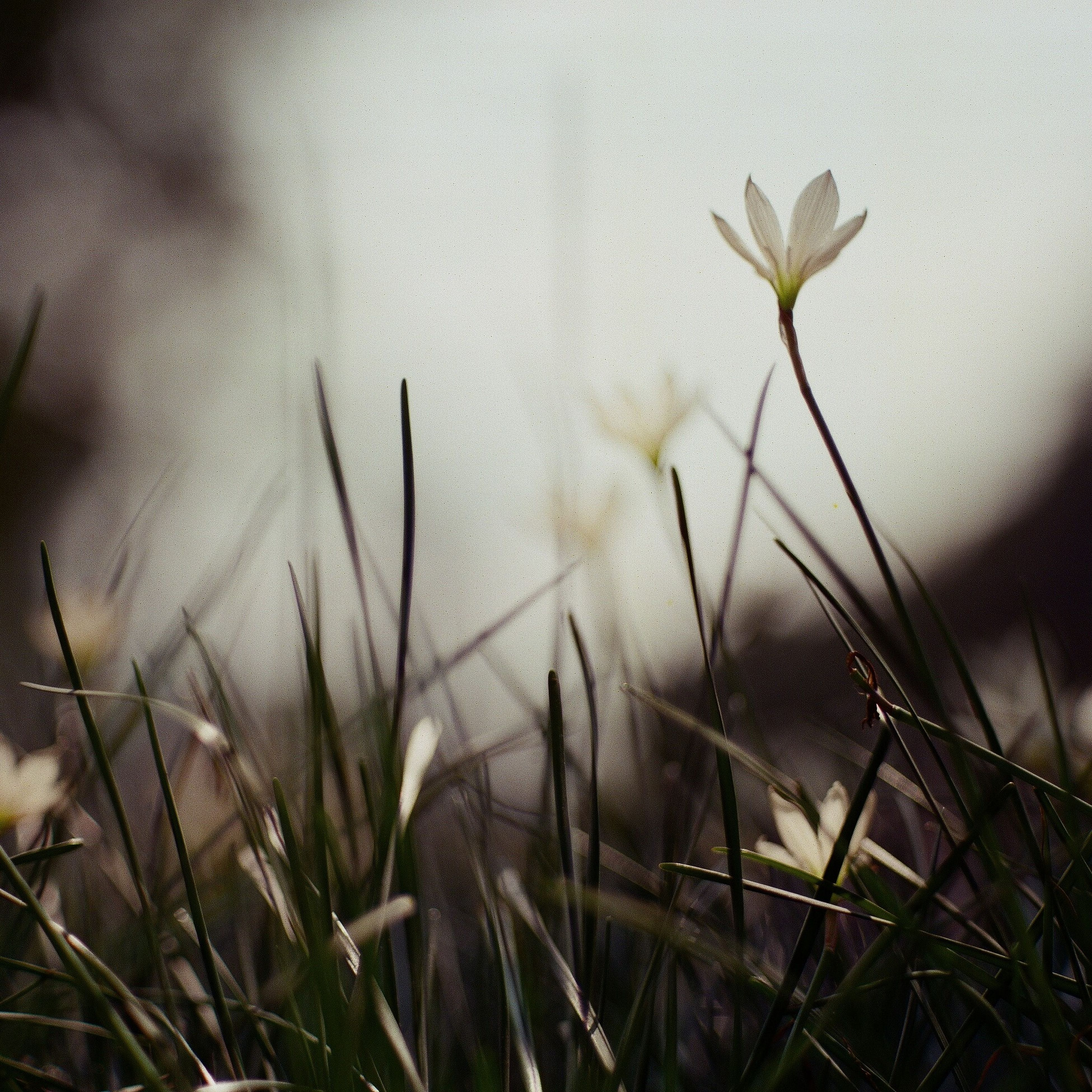 plant, growth, stem, flower, fragility, grass, freshness, close-up, nature, field, focus on foreground, growing, beauty in nature, selective focus, day, outdoors, no people, dry, twig, water