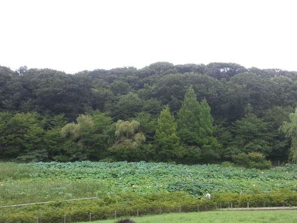 綺麗だな~(^_^)自然はいいよね?