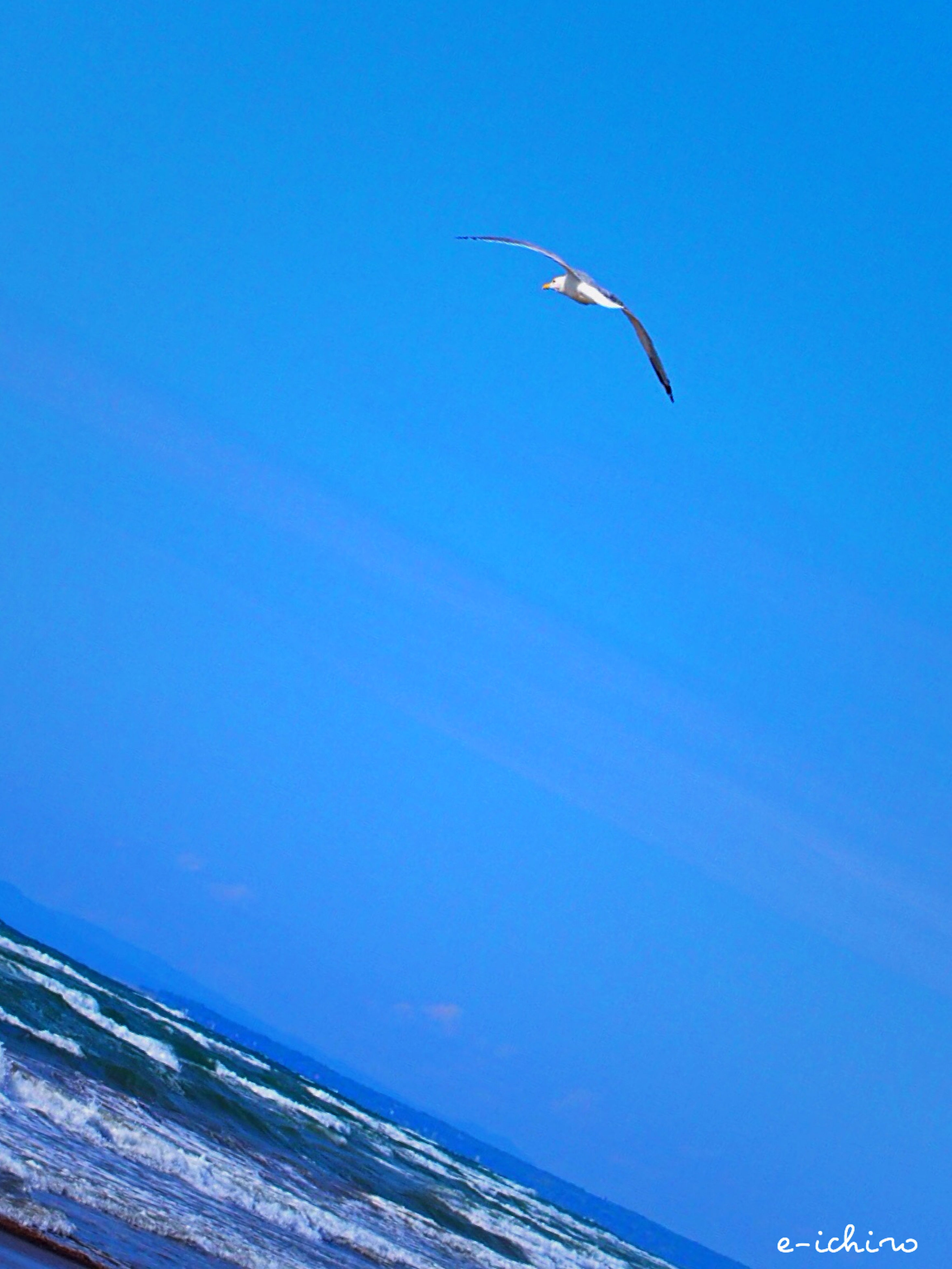 blue, flying, bird, clear sky, animal themes, animals in the wild, wildlife, one animal, copy space, low angle view, spread wings, mid-air, seagull, sea, nature, day, outdoors, no people, beauty in nature, full length