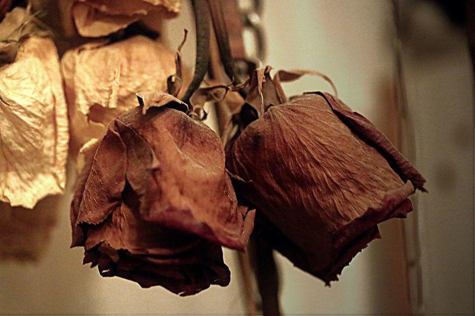 My studio Taking Photos Learn & Shoot: Simplicity My Studio, Art Flowers Micro, Death