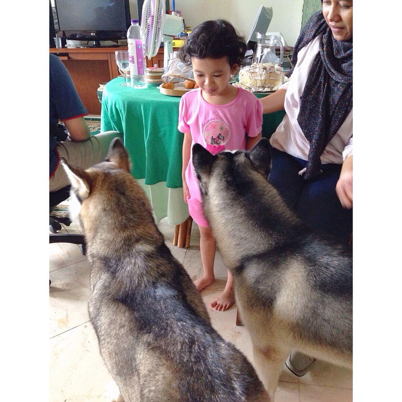 Driaz together with, Kazuo & Baileys. Kids By ITag Driaz And Friends By ITag Friends By ITag Pets By ITag Animal By ITag Kids Familia By ITag