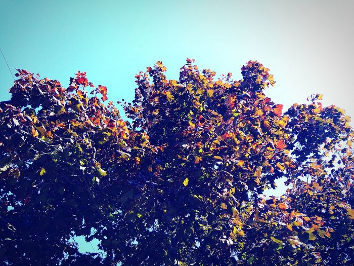 Love autumn Autumn<3 Herbst Baum Tree