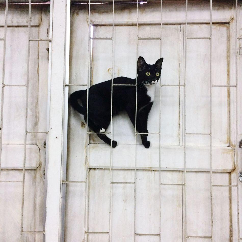 Cat on the window 🐈 First Eyeem Photo Cat Black Black Cat Window Cat♡ Monster Little Little Monster