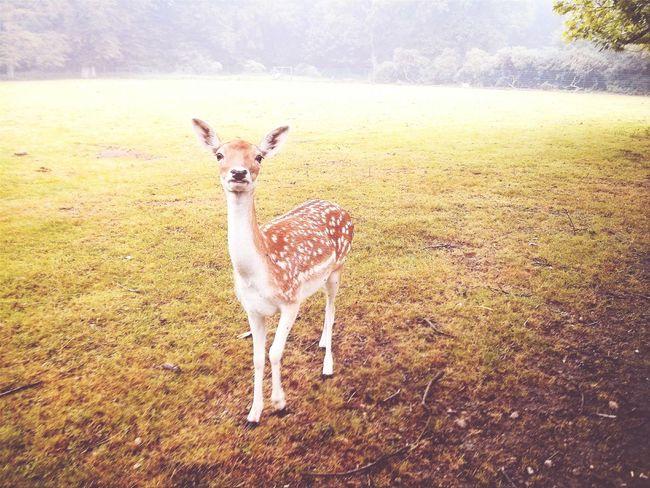 Hamburg, jetzt. Walking Around Bambi Sunday Morning