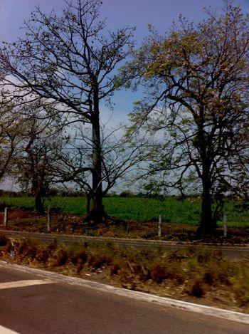 Plantas árbol Tardes Cielo Aire Viaje Camino