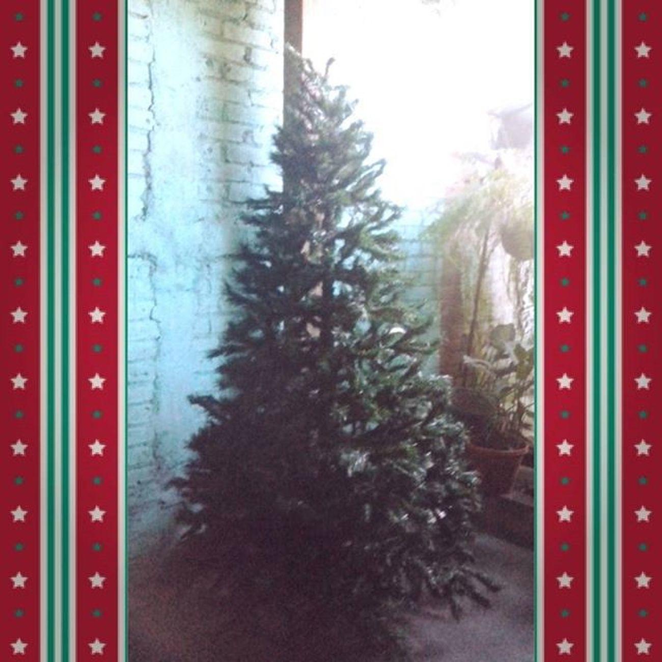La misión de ahora es terminar de decorar el arbolito :3 Christmastree ChristmasIsComing Arbolitodenavidadquesiempreflorecelos24 Morning Imsleepy Sinoficio Sunday