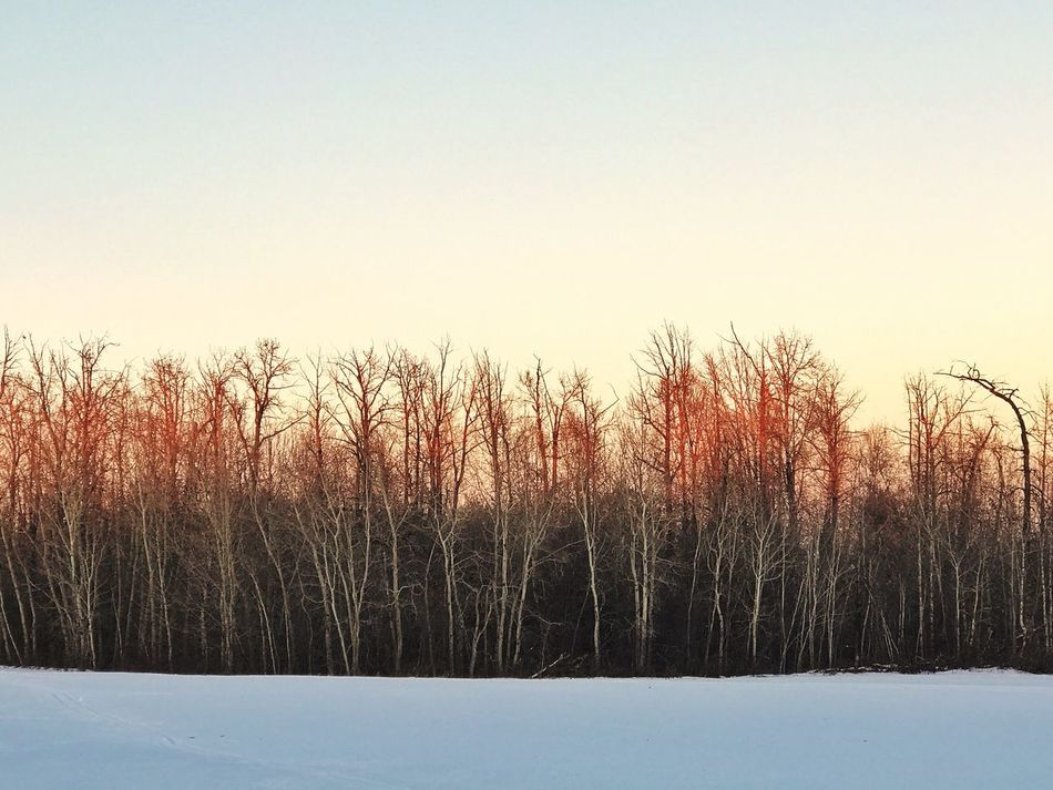 Naturelovers Outdoors Clear Sky Tranquility Cold Temperature Snow Beauty In Nature Winter Bare Tree Tranquil Scene Scenics Hues Hues Of Life Canada Edmonton Sunset Dusk Dusk Colours Beautiful Nature ArtWork Artistic Photo