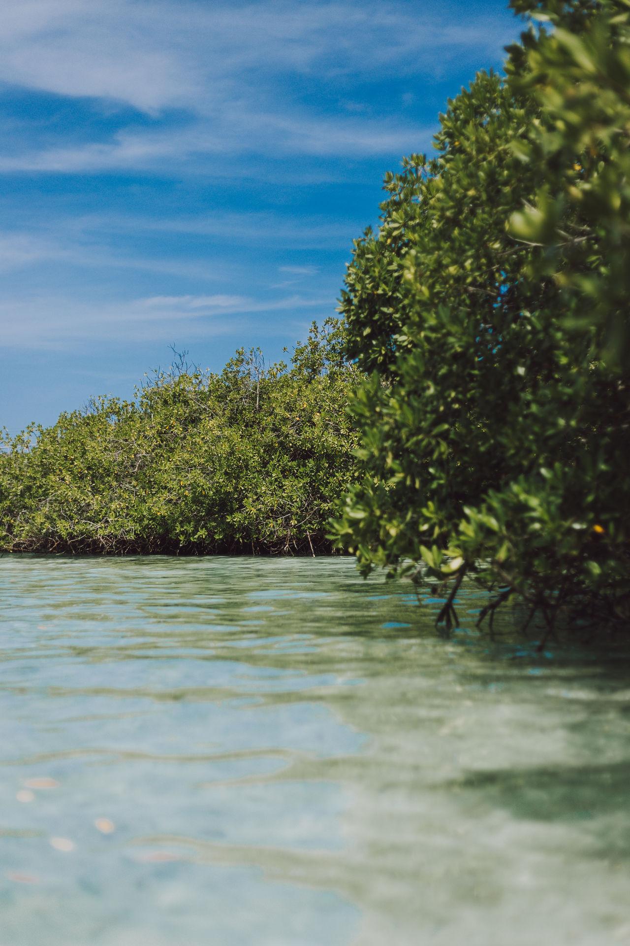 Mangroves in Aruba Aruba Beach Beauty In Nature Mangrove Mangroves Nature No People Outdoors Sky Tranquility Tree Water Waterfront