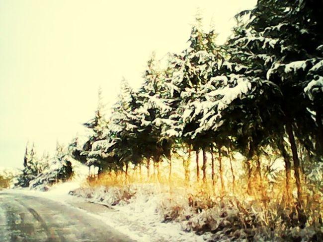 kışın güneşin ilk ışıkları ...