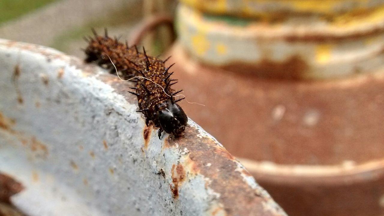 Nature Eyeem Nature Lover Macro ILoveMacro Macro Beauty Inseto Bug Bug Life Cunha Sao Paulo Cunha Brasil