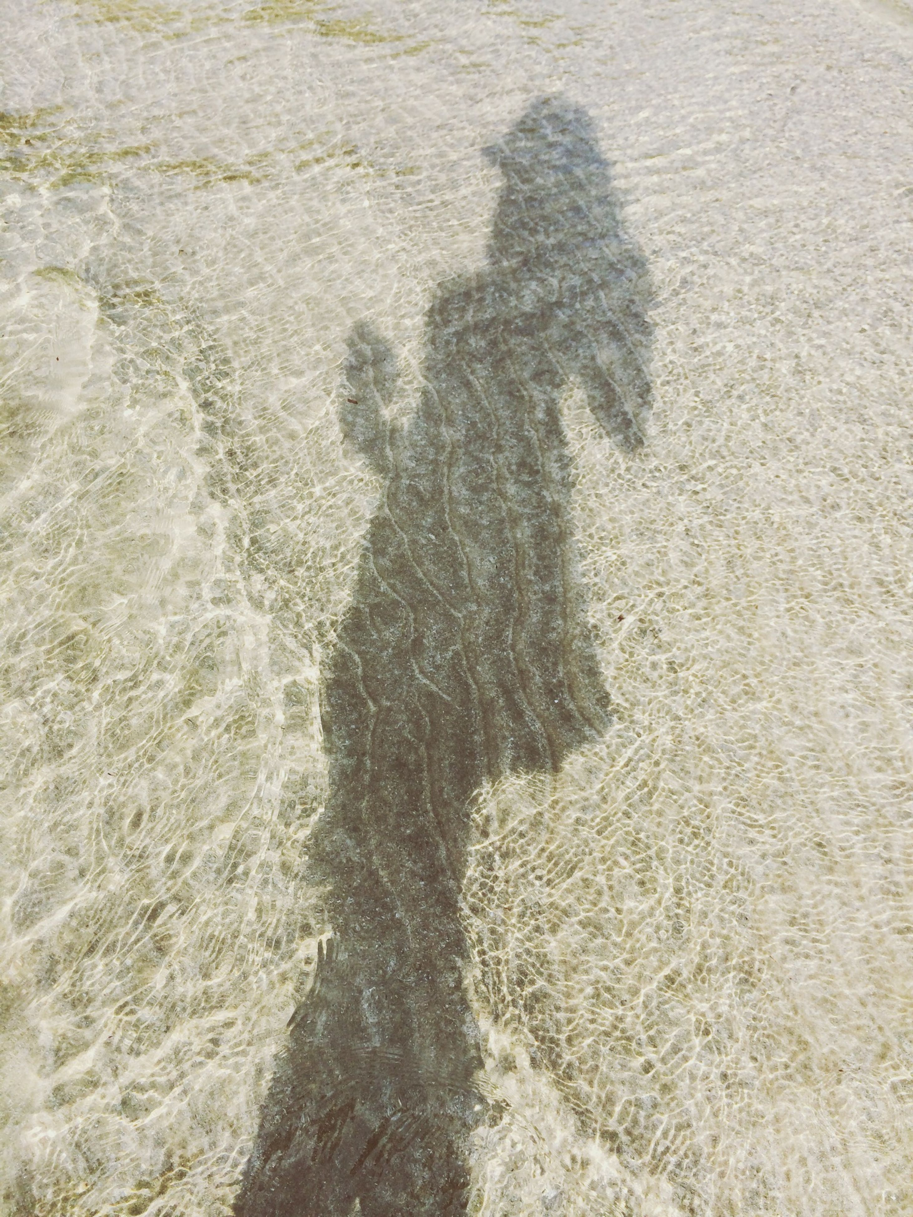 high angle view, shadow, sand, sunlight, focus on shadow, textured, beach, day, outdoors, nature, full frame, field, backgrounds, footprint, pattern, unrecognizable person, tranquility