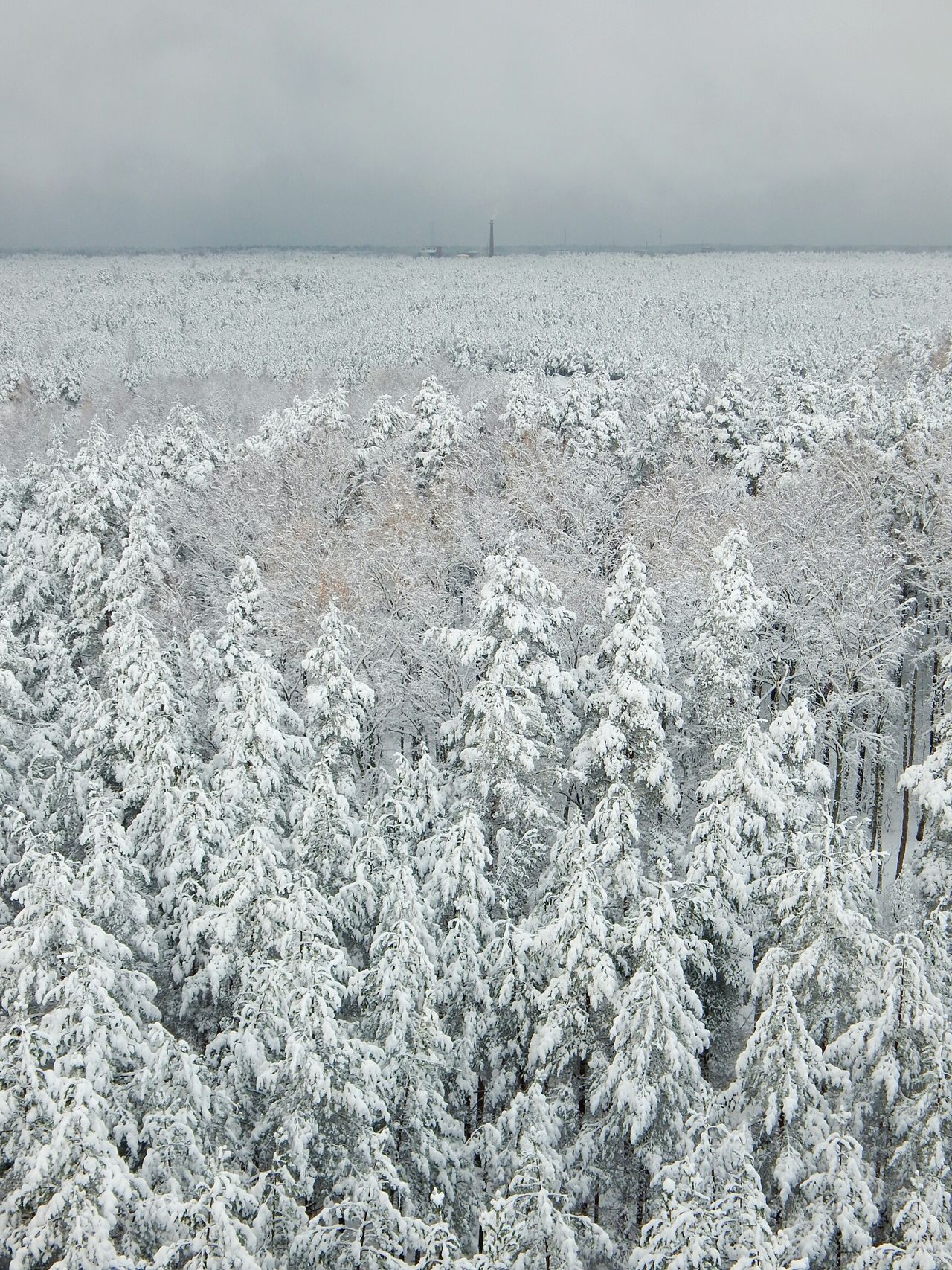 Sky Outdoors Day Backgrounds No People Nature Textured  View From Above Forest Point Of View Latvia Riga View Point Cloud - Sky View Tower Tree Snowing Beauty In Nature Nature Snow Winter Gray