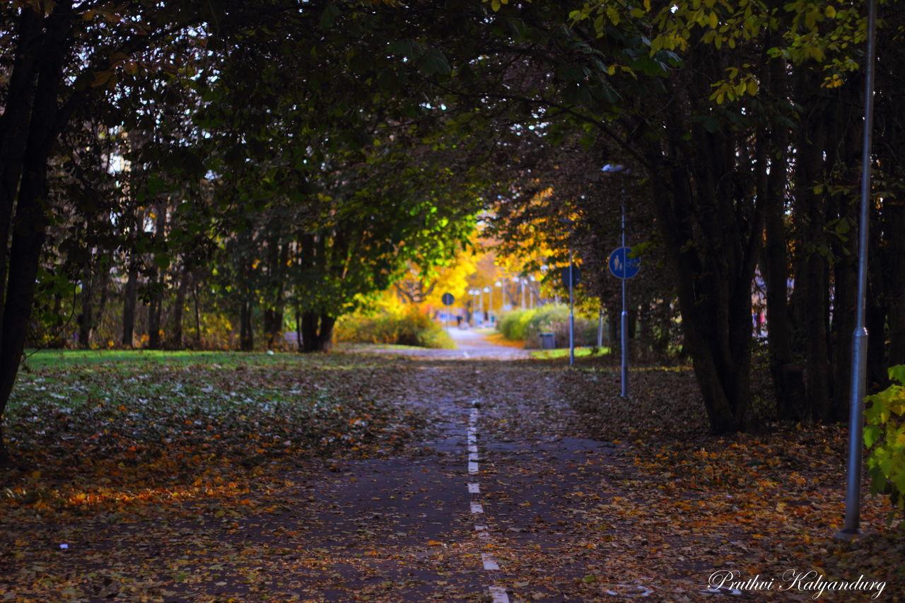 Autumn Darkness And Light Footpath Kantorsgatan Light Outdoors Red And Yellow Sunlight Swedish Autumn Tree Uppsala