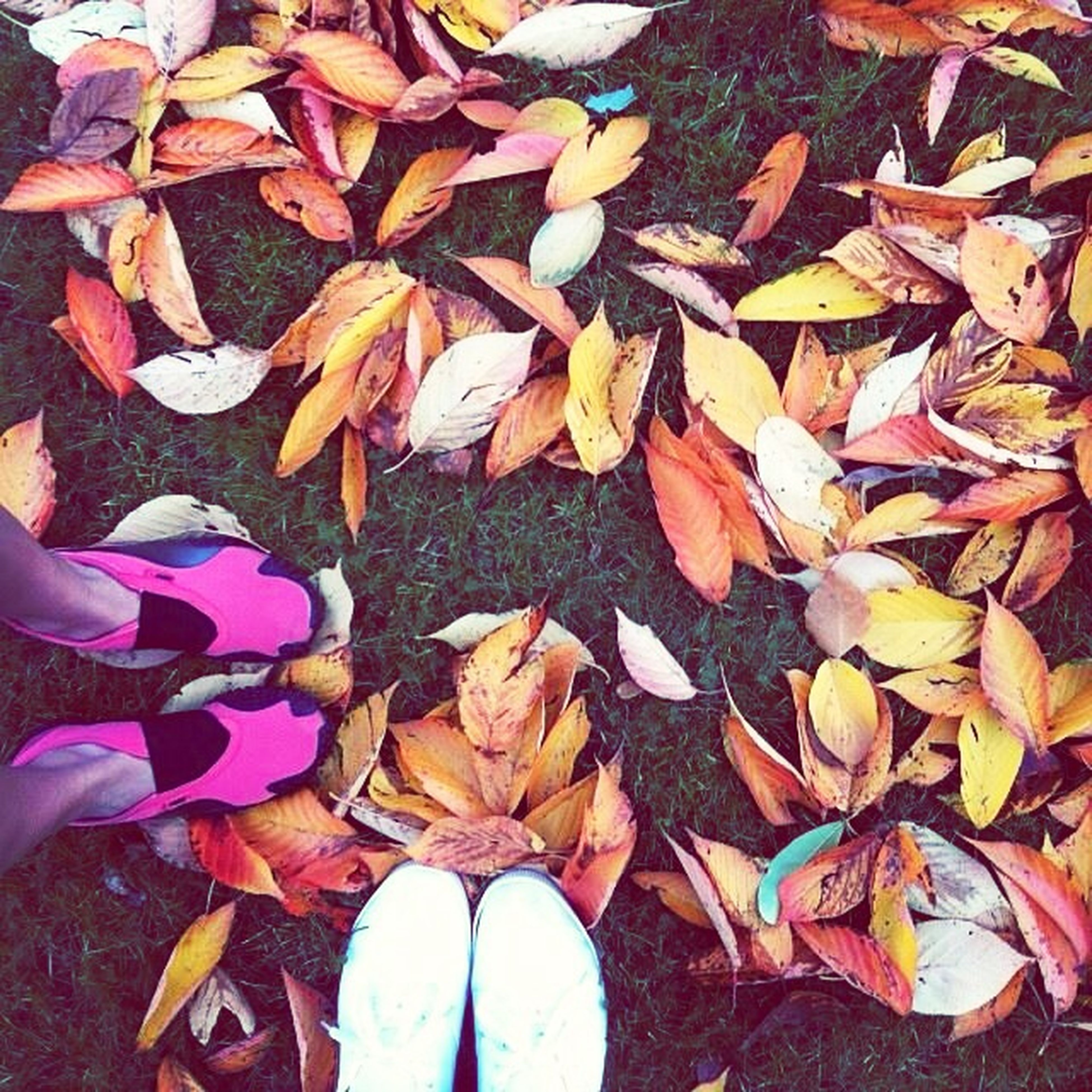autumn, leaf, change, leaves, season, dry, fallen, high angle view, low section, shoe, abundance, maple leaf, person, one person, falling, field, nature, day, outdoors, directly above