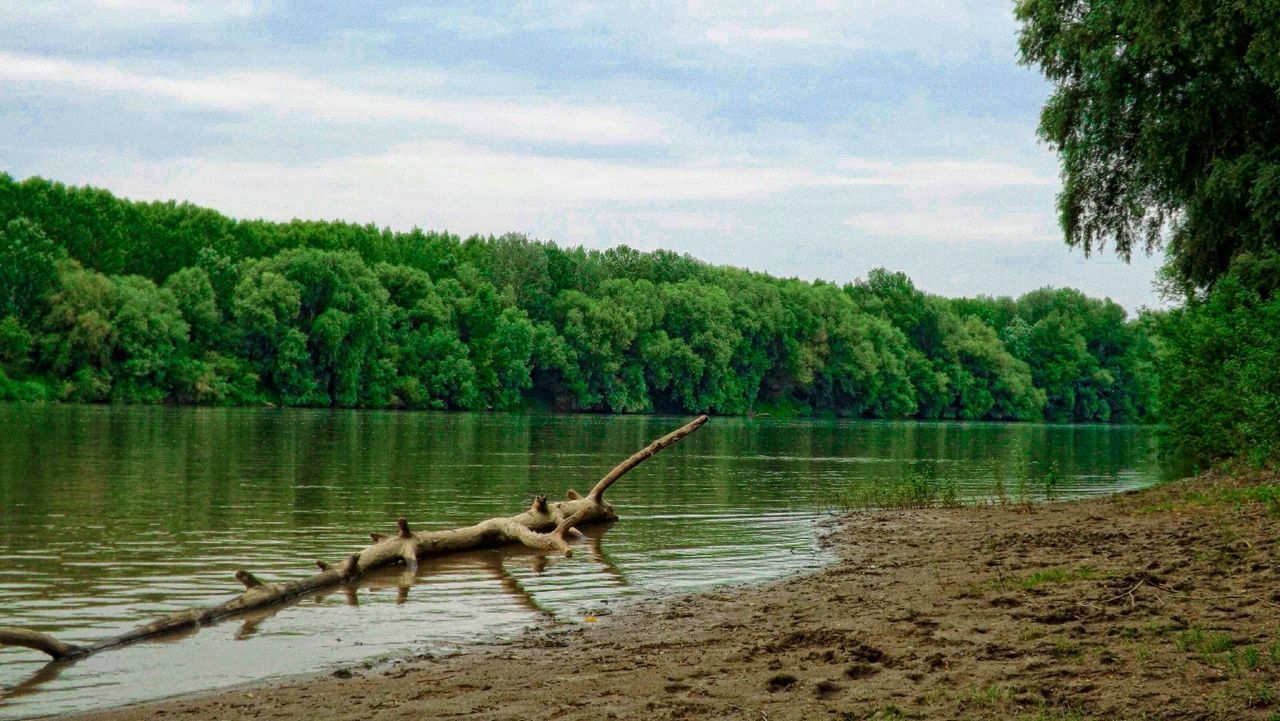 tree, water, lake, one animal, nature, sky, cloud - sky, day, outdoors, no people, animal themes, animals in the wild, beauty in nature, scenics, growth, mammal