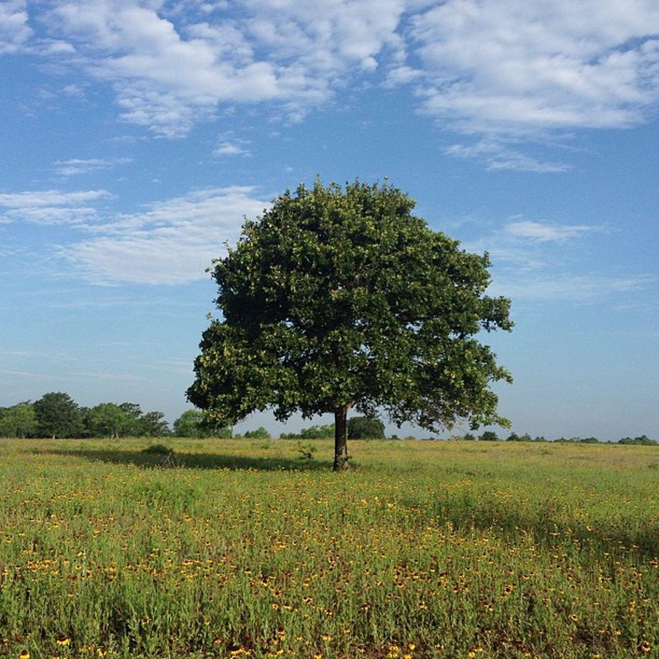 Lone Tree 29 No Filter
