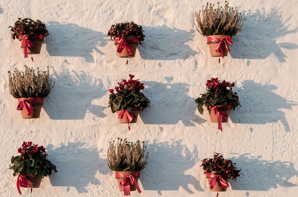 Botany Flower Head Grass Green Color Italy Locorotondo No People Outdoors Pattern Plant Red Shadow Shadows & Lights Simmetry Travel White Wall Winter
