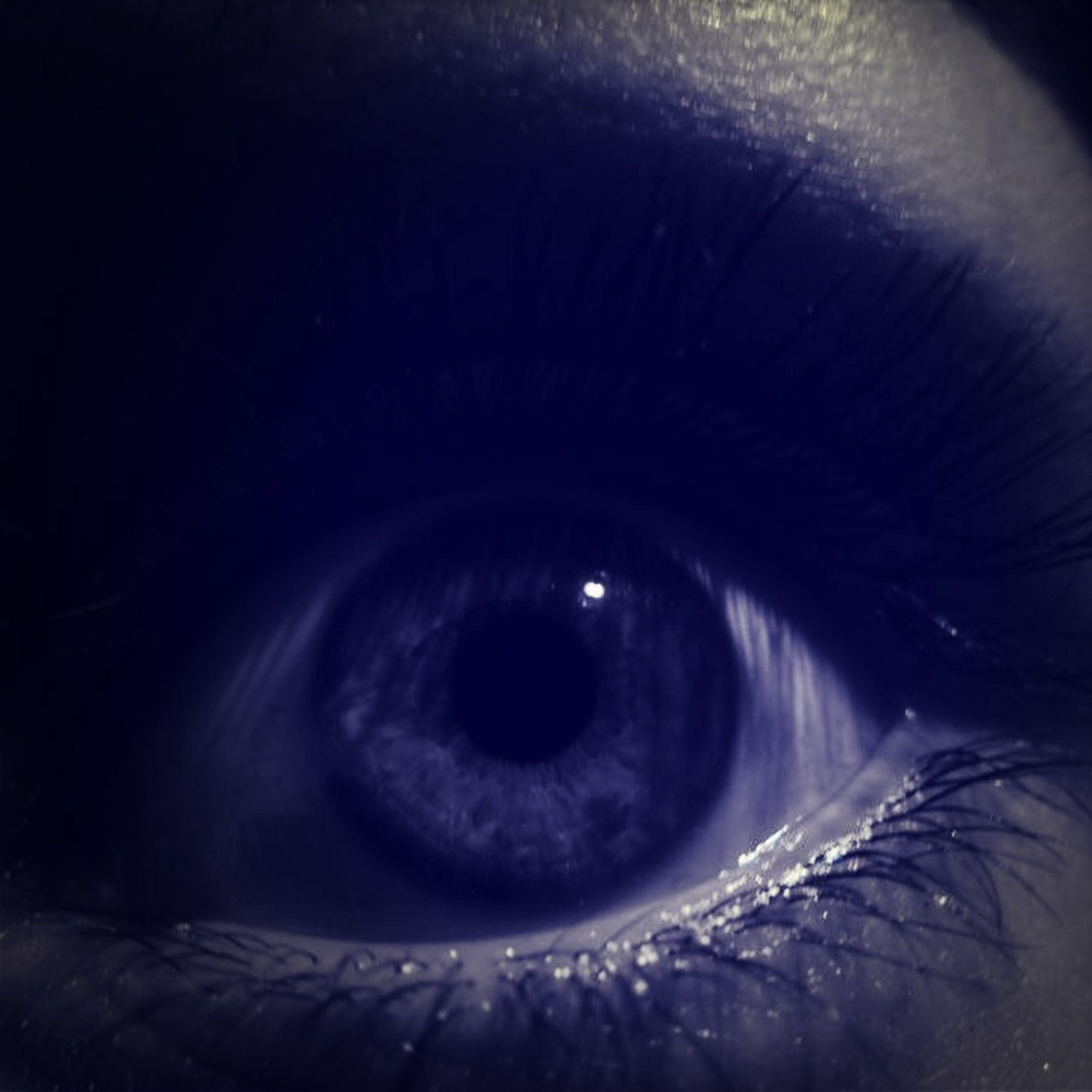 close-up, human eye, eyesight, eyelash, sensory perception, indoors, part of, extreme close-up, extreme close up, looking at camera, eyeball, portrait, animal body part, detail, unrecognizable person, animal eye, iris - eye